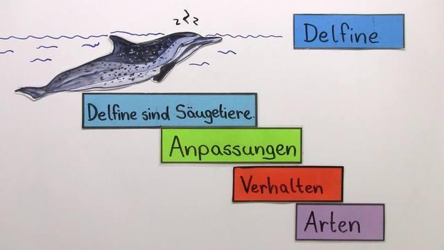 Der Delfin – Säuger in Fischgestalt
