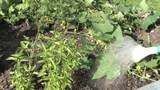 Was ist Gemüse