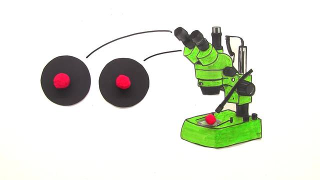 Mikroskop – Anfertigen von Skizzen